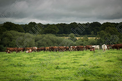 Chichester-College-040917-MA0025 