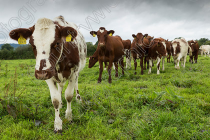 Chichester-College-040917-MA0029 